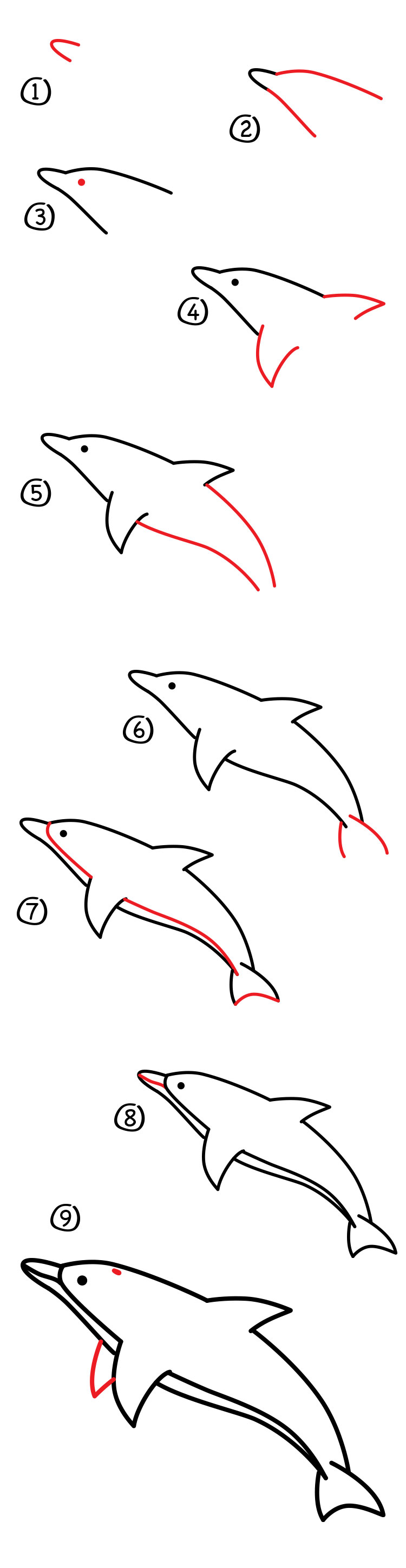 How to draw a dolphin art for kids hub jeuxipadfo Gallery