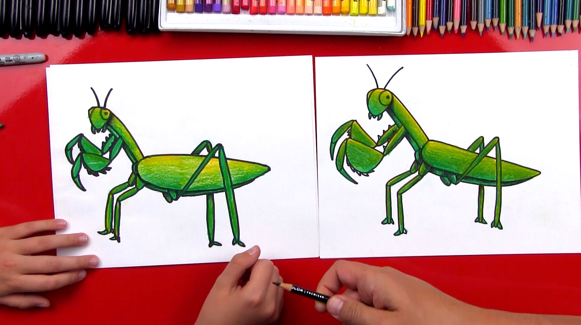 How To Draw A Praying Mantis Art For Kids Hub
