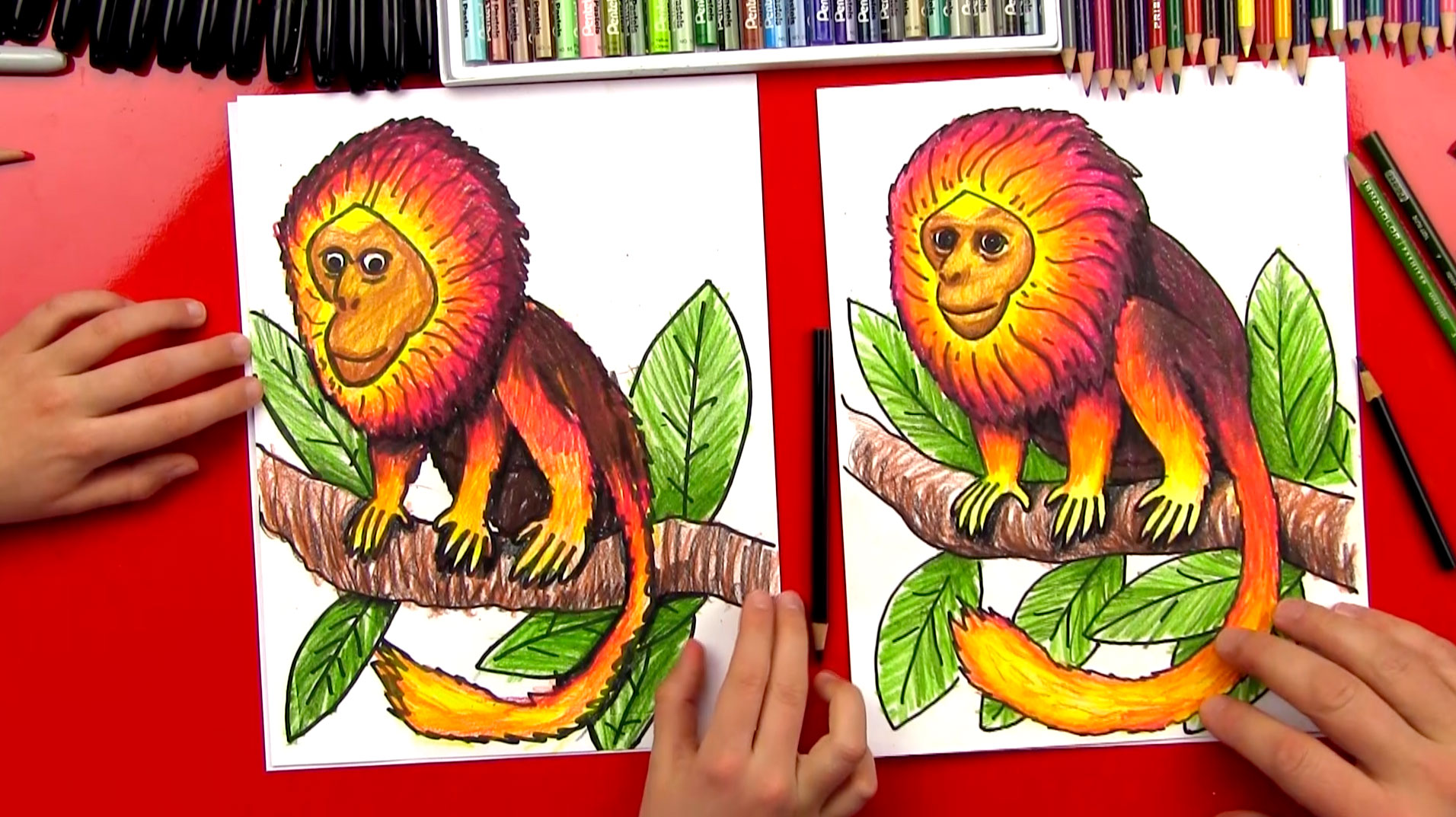 How To Draw A Golden Lion Monkey - Art for Kids Hub