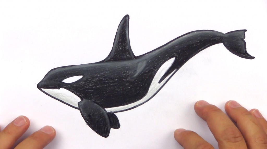 How To Draw A Realistic Orca (Art Club Members)