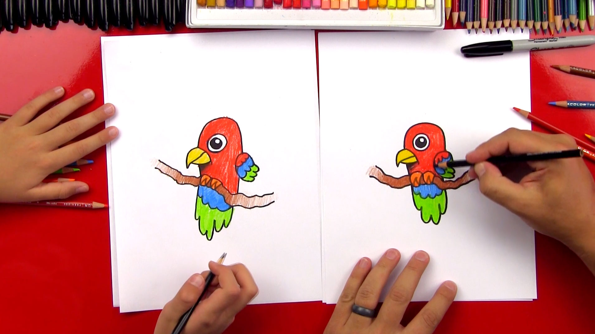 how-to-draw-cartoon-parrot-feature