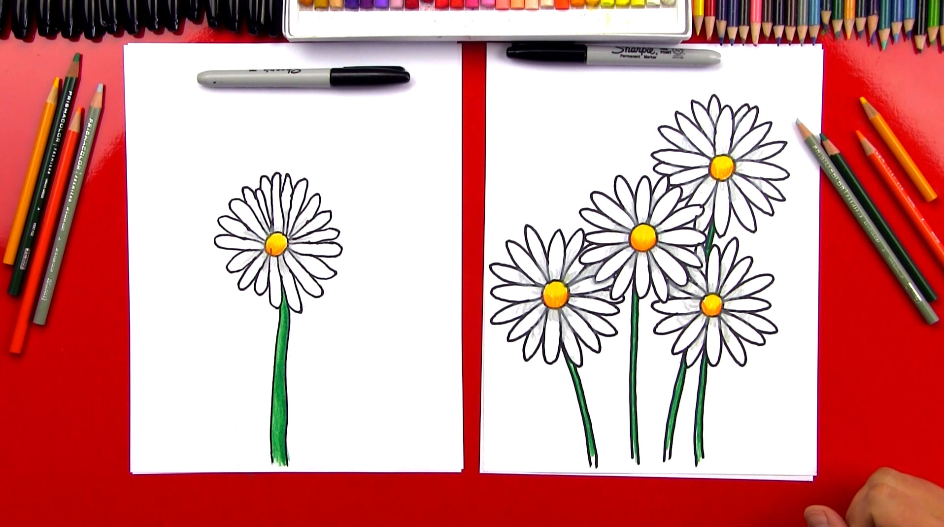 How To Draw A Daisy Flower - Art For Kids Hub -