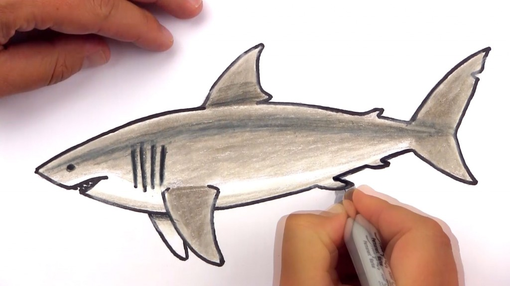 How To Draw A Realistic Great White Shark (Art Club Members)