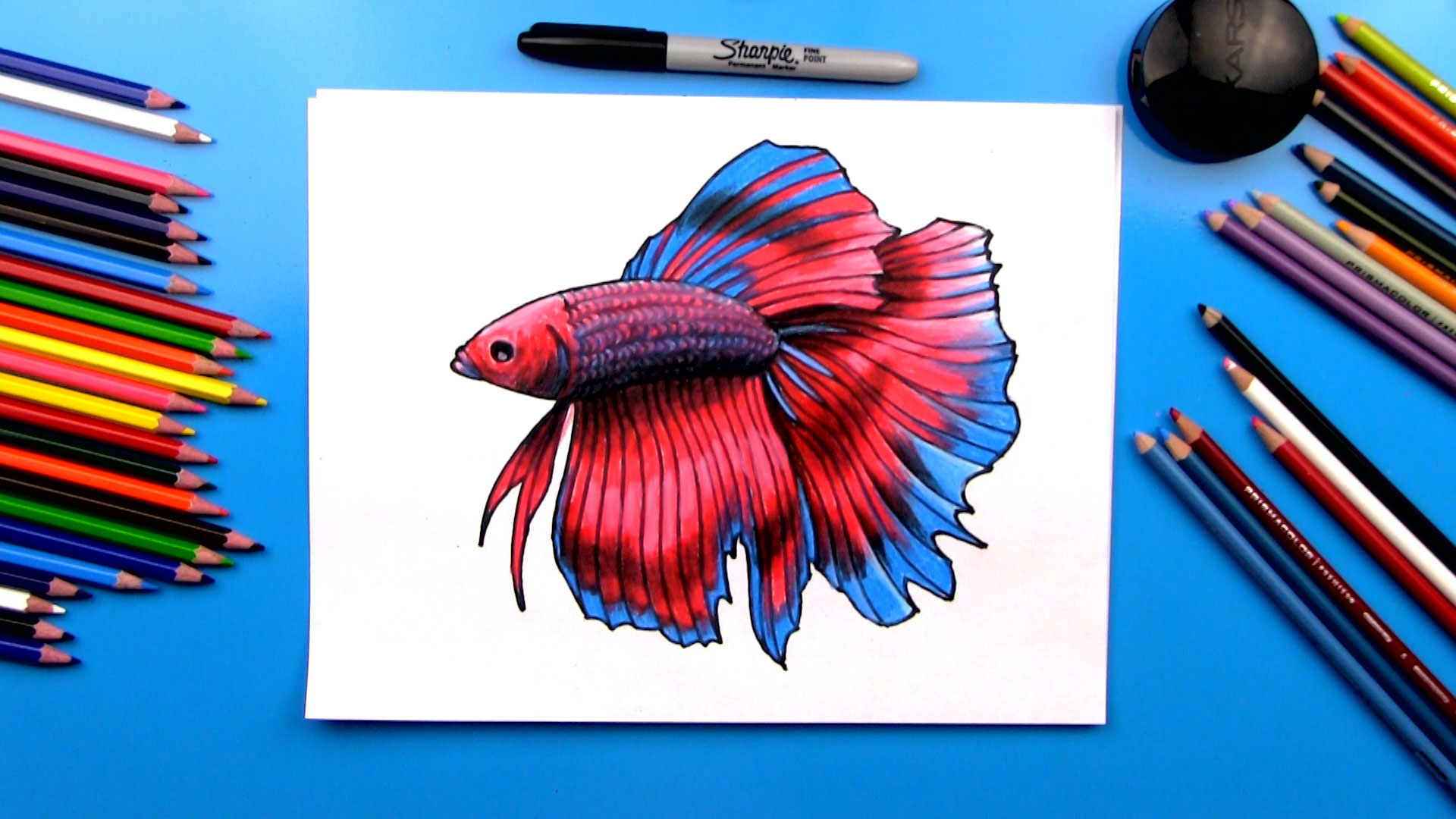 How To Draw A Realistic Betta Fish Art For Kids Hub