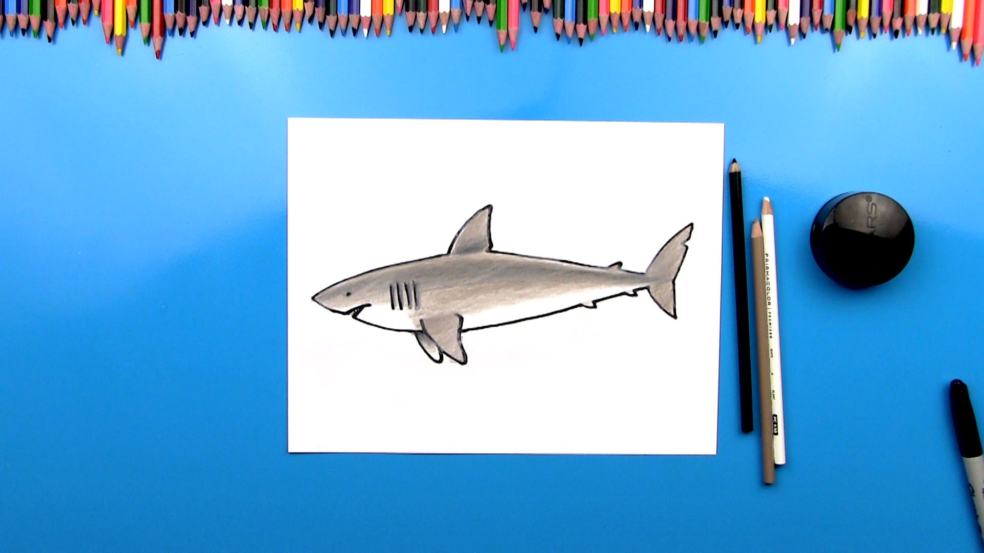 How to draw a great white shark art for kids hub
