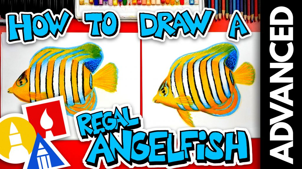 How To Draw A Regal Angelfish – Advanced