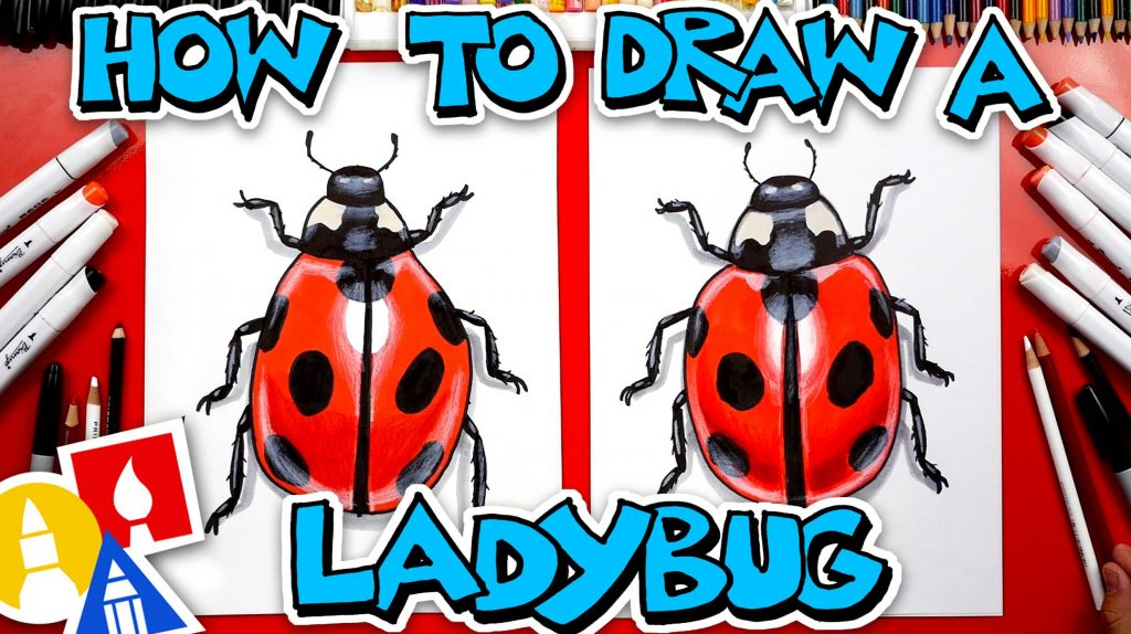 How To Draw A Realistic Ladybug
